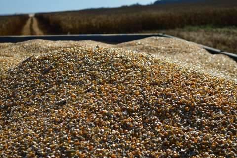 Lançamento da colheita do milho safrinha 2017/2018 acontece na 2ª feira