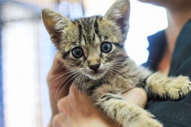 Gatinhos também são resgatados e precisam de ajuda. (Foto: Arquivo/Marina Pacheco)