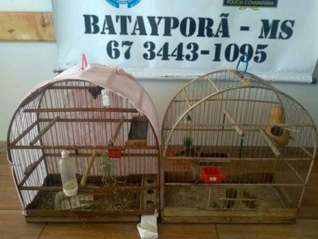 Homem é multado em R$ 1,5 mil por criar aves silvestres em cativeiro