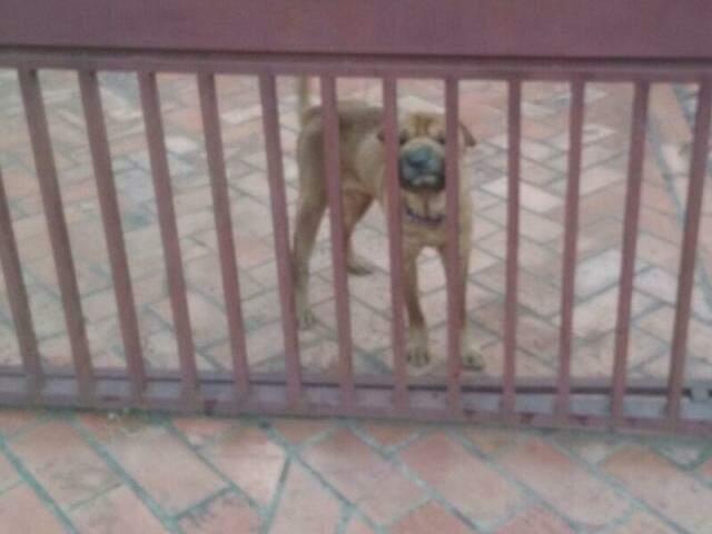 O cão encontra-se magro e bastante debilitado. (Foto: Direto das Ruas)