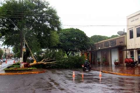 Manhã de chuva tem árvores caídas, ruas alagadas e trânsito caótico