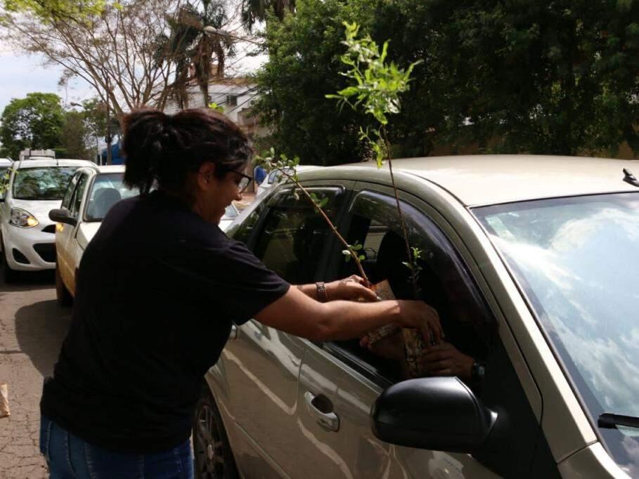 Servidora entrega plantio até para quem passava de carro pela rua. (Foto: Henrique Kawaminami).