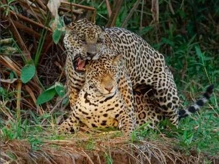 Larissa passa meses no Pantanal e registra com delicadeza o hábito dos animais