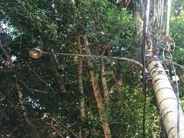 Poste escondido entre as árvores deixa rua às escuras na Vila Carlota (Foto: Ronie Cruz)