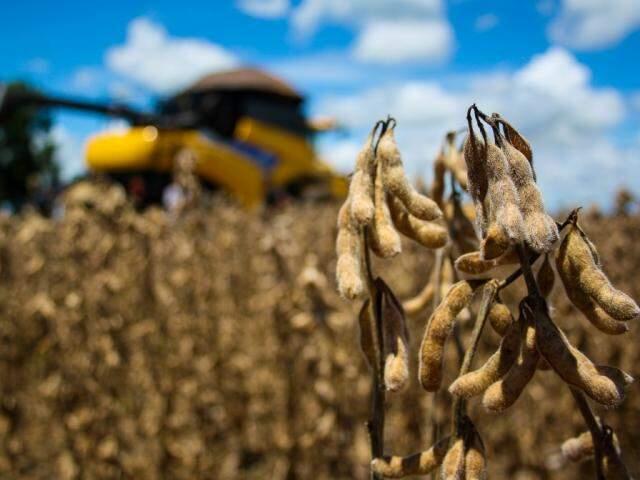 Plantação de soja em Mato Grosso do Sul. (Foto: Marcos Ermínio/Arquivo)
