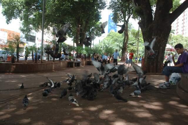 A Praça Ary Coelho, hoje fechada para obras, sempre concentrou grande quantidade de pombos, que se misturam às pessoas, colocando em risco a saúde de todos. Os animais também estão presentes no Mercadão Municipal, escolas e outros hipermercados. (Foto:Marcelo Victor)