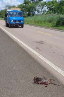 Justiça ordena monitoramento para conter acidentes com animais na BR 359