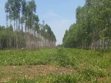 Aplicativo desenvolvido na UFMS será usado por produtores rurais na Amazônia