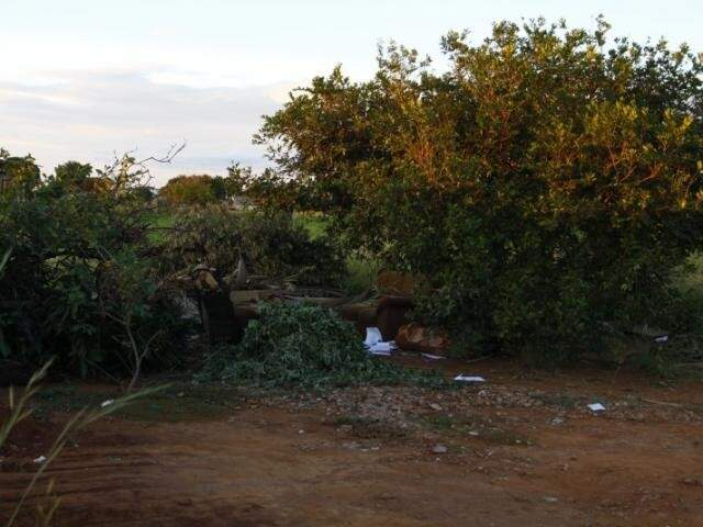 Mato perto da Base Aérea, um dos pontos de pegação em Campo Grande. (Foto: Cleber Gellio)
