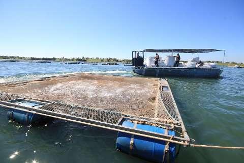 Potencial hídrico atrai investimentos e coloca MS no mercado de pescado