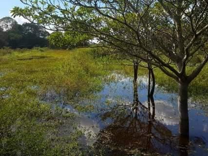 Pico da cheia no Pantanal ficará longe dos níveis mais altos, diz Embrapa