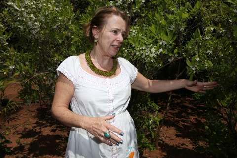 Apesar de nativa e do apelo afetivo, guavira está sumindo do Cerrado