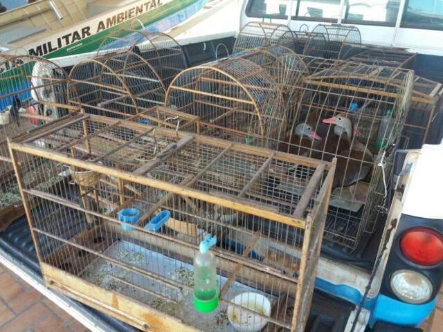 Apreensão de aves e até gansos que seriam traficados. (Divulgação PMA)