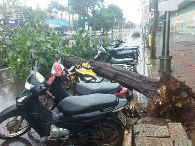 Árvore caiu sobre motos em frente ao shopping de Dourados (Adalberto Domingos)
