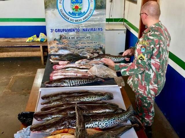 Ao todo foram 84 kg de pescado apreendido (Foto: Reprodução)
