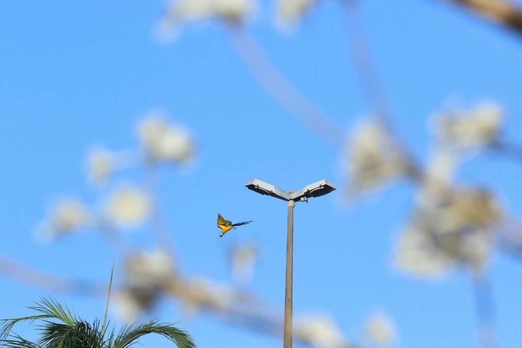 Primavera começa às 16h de hoje e máxima em Campo Grande atinge 37ºC. (Foto: André Bittar)