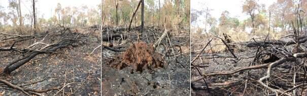 Área de 21 hectares foi incendiada na Fazenda Lago Azul, em Rochedo (Foto: PMA/Divulgação)