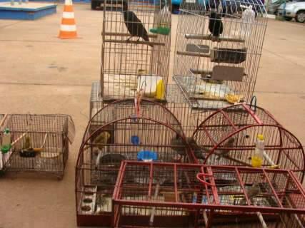 Guarda noturno é multado em R$ 4 mil por criar ilegalmente aves silvestres