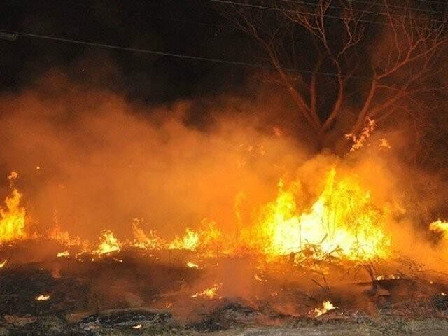 Incêndio em vegetação em Mato Grosso do Sul (Foto: Diário Corumbaense)