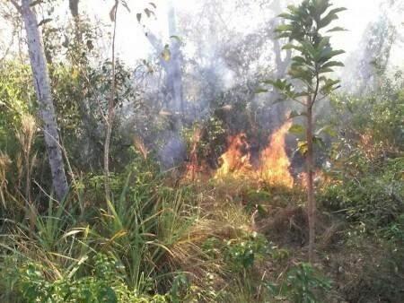 Incêndio consumiu mata nativa por duas semanas. (Foto: Instituto Homem Pantaneiro)