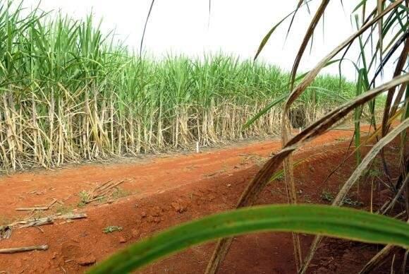 A área colhida sofreu uma redução de 3,1%, passando de 9,05 milhões para 8,77 milhões de hectares (Elza Fiúza/Agência Brasil)