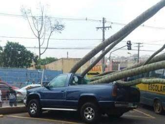 Caminhonete foi bastante danificada pelos troncos da árvore (Foto: Direto das Ruas)