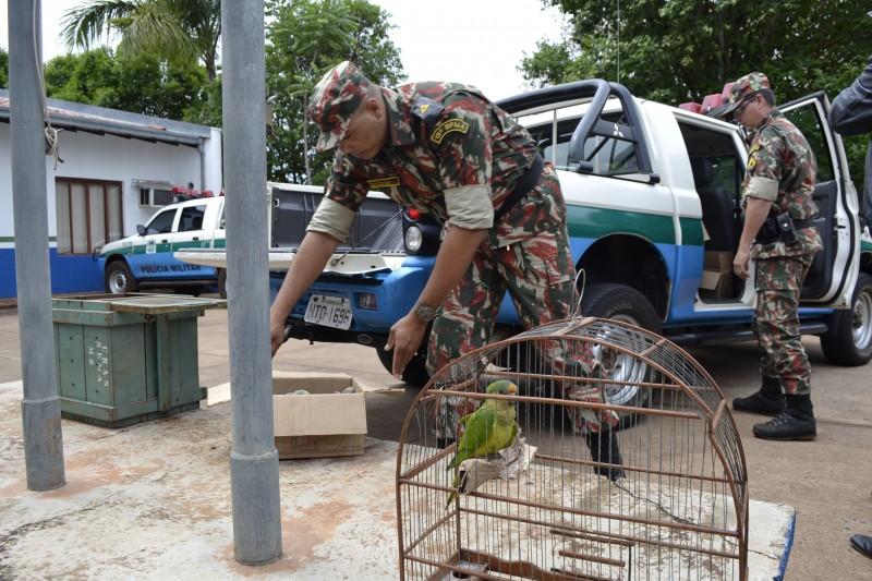 Policiais militares ambientais encaminharam as aves para o Cras de Campo Grande. (Foto: Pedro Peralta)
