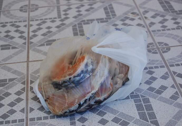 Quase dois quilos de Pirarucu estavam estragados. (Fernando Dias)