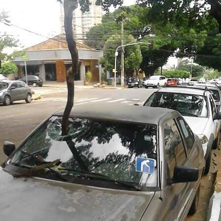 Um galho caiu sobre o para-brisa de um veículo Scort, devido as fortes rajadas de vento. (Foto: Direto das Ruas)