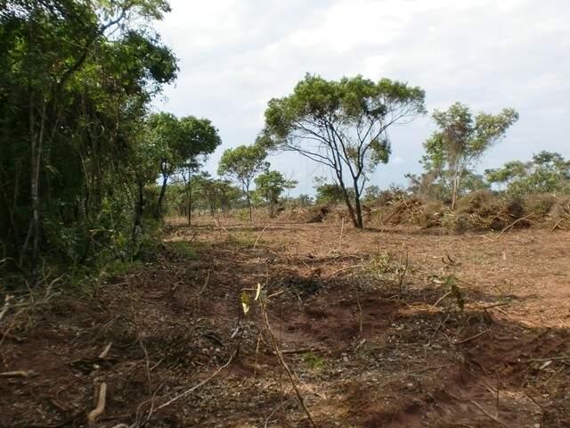 15 hectares de vegetação nativa do cerrado foram desmatadas sem licença ambiental. (Foto: PMA/ Divulgação)