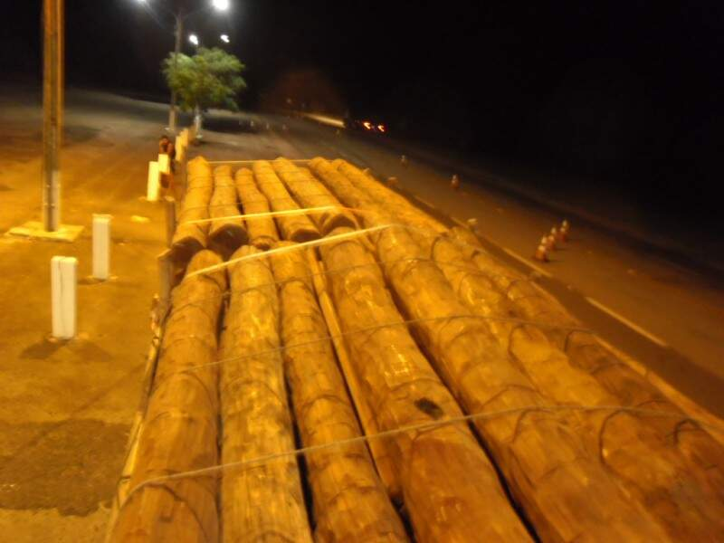 Madeira não pode ser derrubada sem autorização (Foto: Divulgação/PMA)