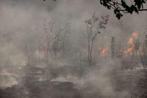 Capital já teve 196 focos de queimadas este ano; tendência é aumentar