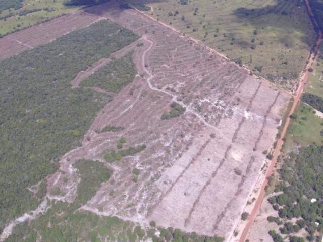 Área de 80 ha desmatado em APA (Foto: Antonio Roberto)