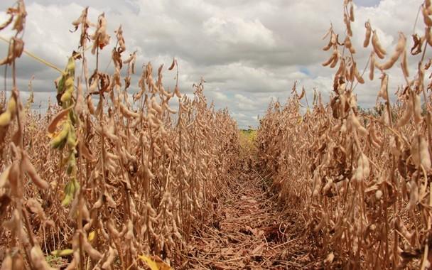 Clima colabora com colheita que chega a 68% de área em MS. (Foto: Aprosoja/MS)