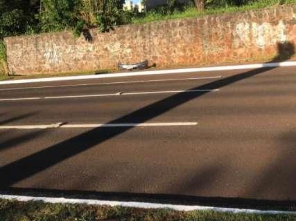 Capivara é atropelada, motorista foge, mas deixa a placa do veículo no local