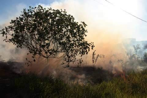 Com tempo seco, Capital tem 15 ocorrências de incêndio em vegetação