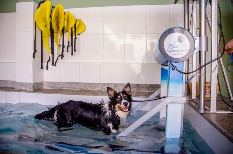 A ZhenVet possui estrutura para melhor atender os animais e conta com piscina aquecida e coberta e hidroterapia. (Foto: Vanessa Tamires)