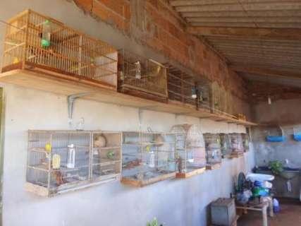 PMA apreende 15 pássaros durante operação e aplica $ 25,5 mil em multas