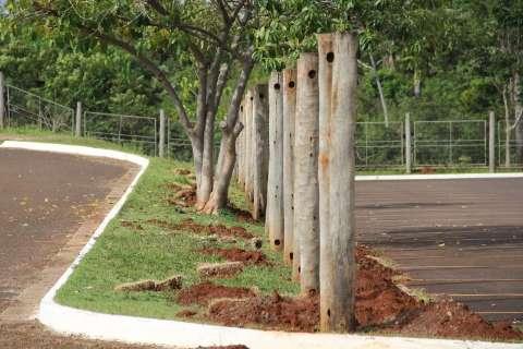 Ex-ponto de algazarra, parque nasceu há 16 anos para preservar vereda