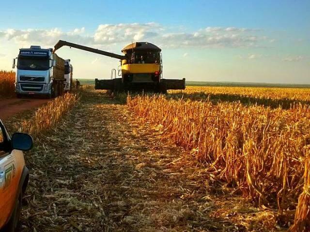 Colheita do milho safrinha começou na última semana de junho, em MS. (Foto: Aprosoja/MS)