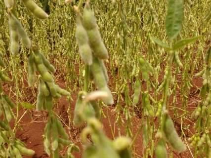 Com estimativa de safra recorde, mais de 90% da soja já foi colhida em MS