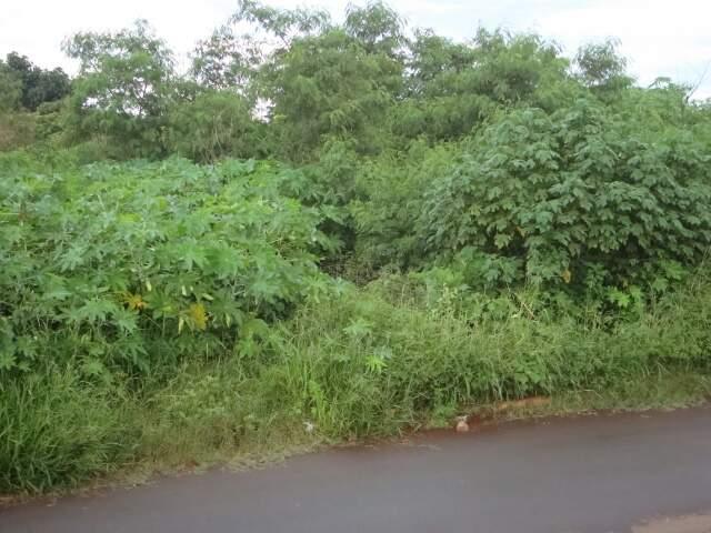 Matagal incomoda moradores do bairro Vida Nova II preocupados com a dengue.