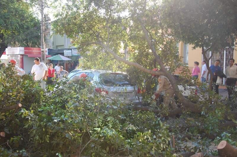 Árvore caiu sobre veículos em avenida. (Foto: Nyelder Rodrigues)