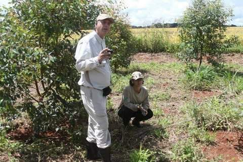 Em 4 anos, projeto planta 10,5 mil árvores no Cerrado