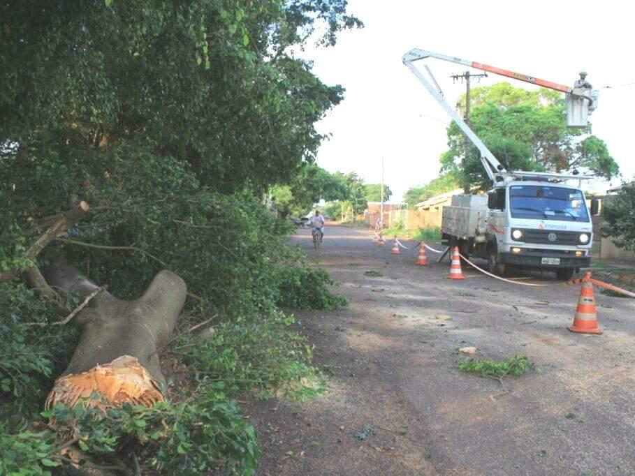 Árvore de grande porte que caiu em cima de fiação elétrica e muro na Rua Traíra, no Bairro Itamaracá (Foto: Marina Pacheco)