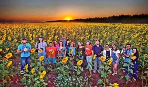 Plantação vira sucesso como cenário incrível de fotos em meio aos girassóis