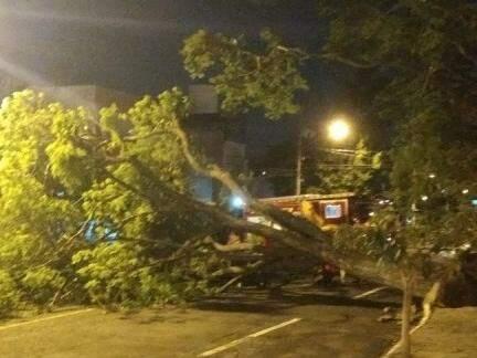Árvore de grande porte caiu na rua 7 de Setembro. (Foto: Direto das Ruas)