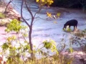 Anta bebendo água tranquilamente em um dos rios na propriedade da Família Alves (Foto: Arquivo Pessoal)