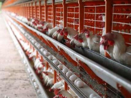 Prazo para registro de granjas em MS termina daqui um mês, alerta entidade