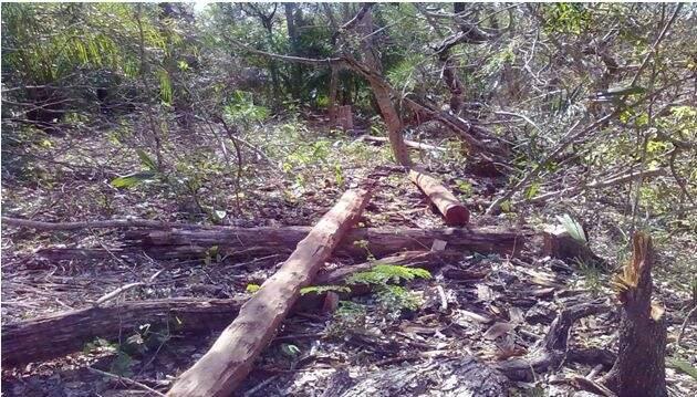 Na fazenda foram encontradas espécies de aroeira, ipê e angico. (Foto: divulgação)